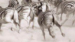 zoo stampede